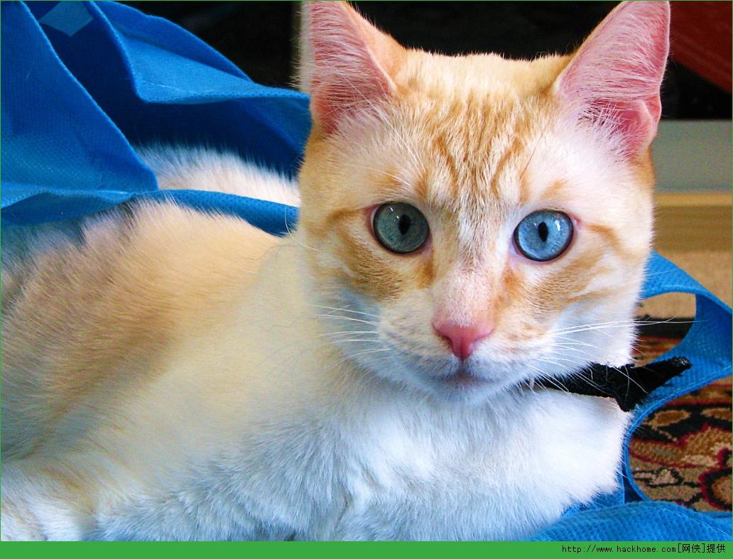 壁纸 动物 猫 猫咪 小猫 桌面 1032_787