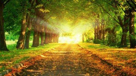 丛林里的阳光桌面壁纸下载